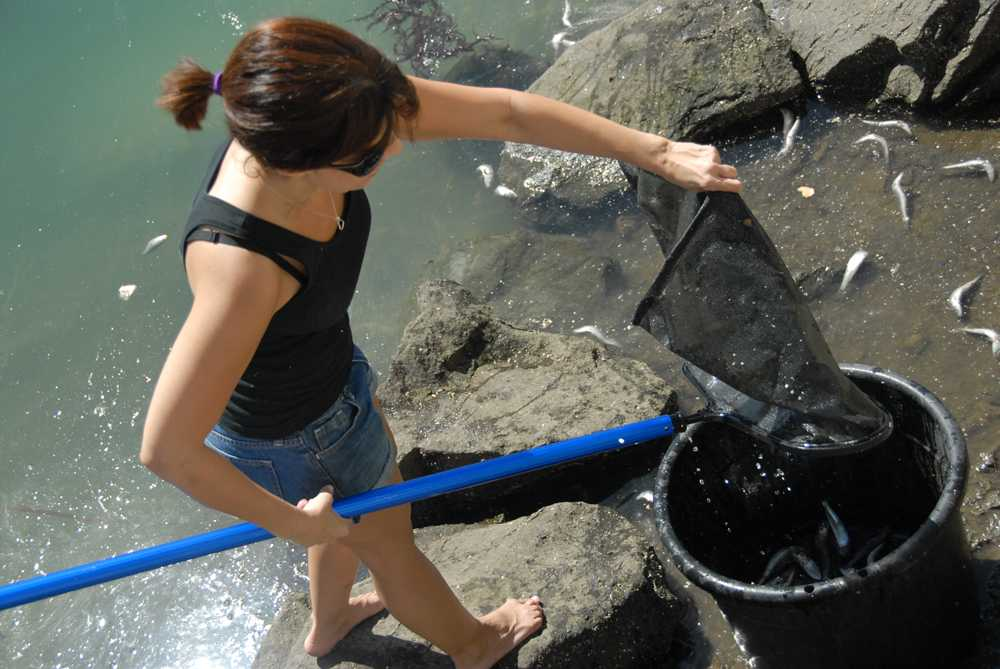 Volunteer helps clean up the Marina