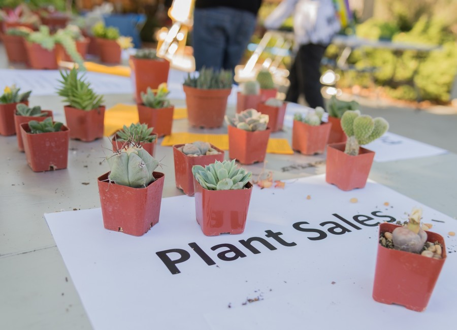 The plants are all drought-friendly, meaning that they require less water than most plants do.