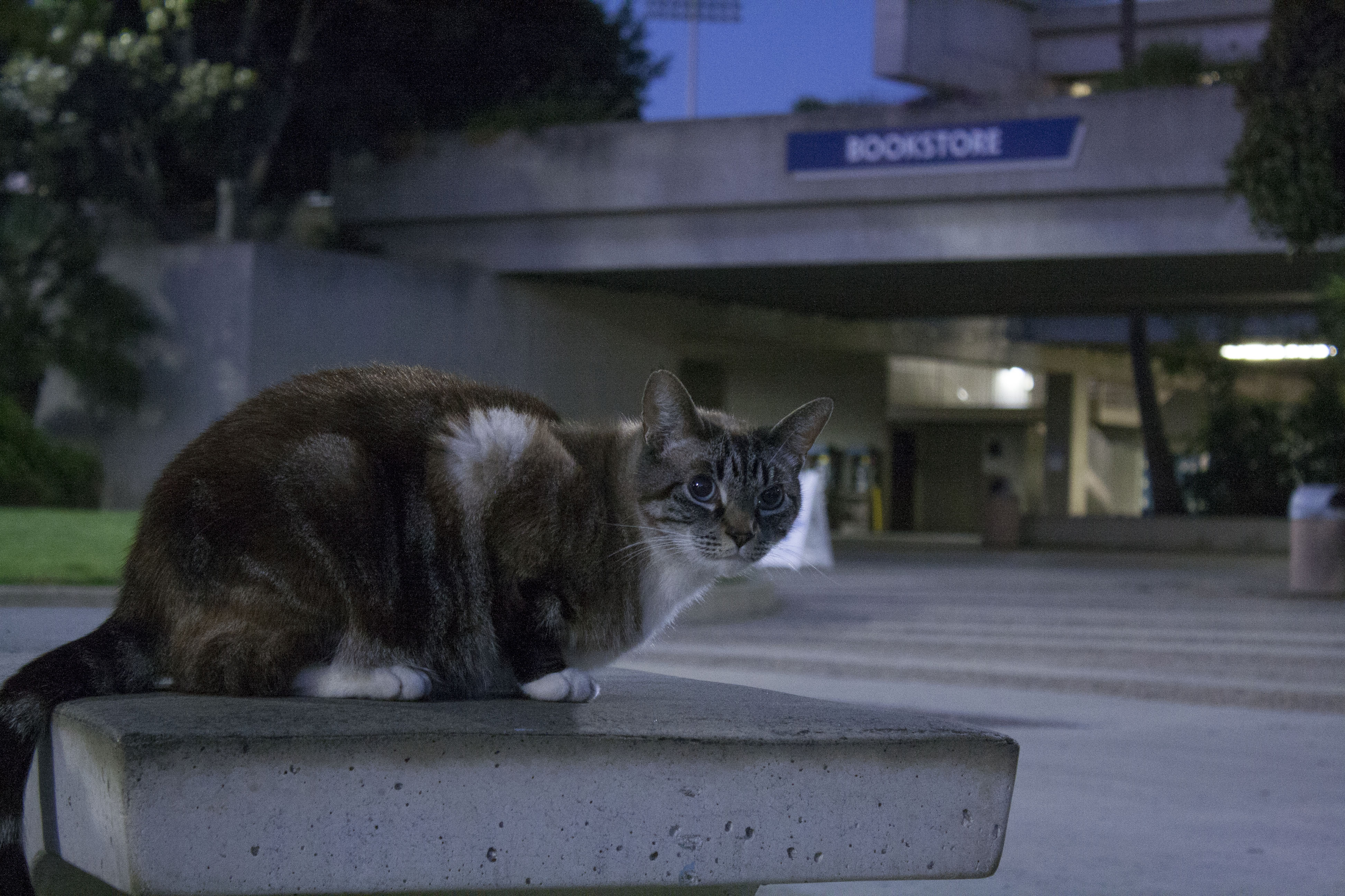 A look behind the 'Cats of El Camino'