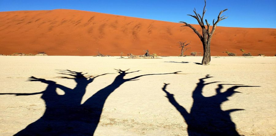 "The LA Times winning photograph, the shadows of two trees on the ground and a one tree in focus with a sand hill in the background. ""I've traveled to 153 countries of the world and I've traveled to 30 countries in Africa. And in Africa, Namibia is my favorite country of the 30,"" Ebiner said. Photo courtesy of Matthew Ebiner"