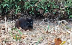 'Dean of cats' found dead on campus