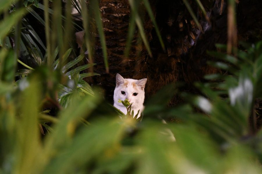 A cat looks on as it seeks shelter at night behind some plants.  March 6, 2019. Photo credit: Nicoleene Yunker