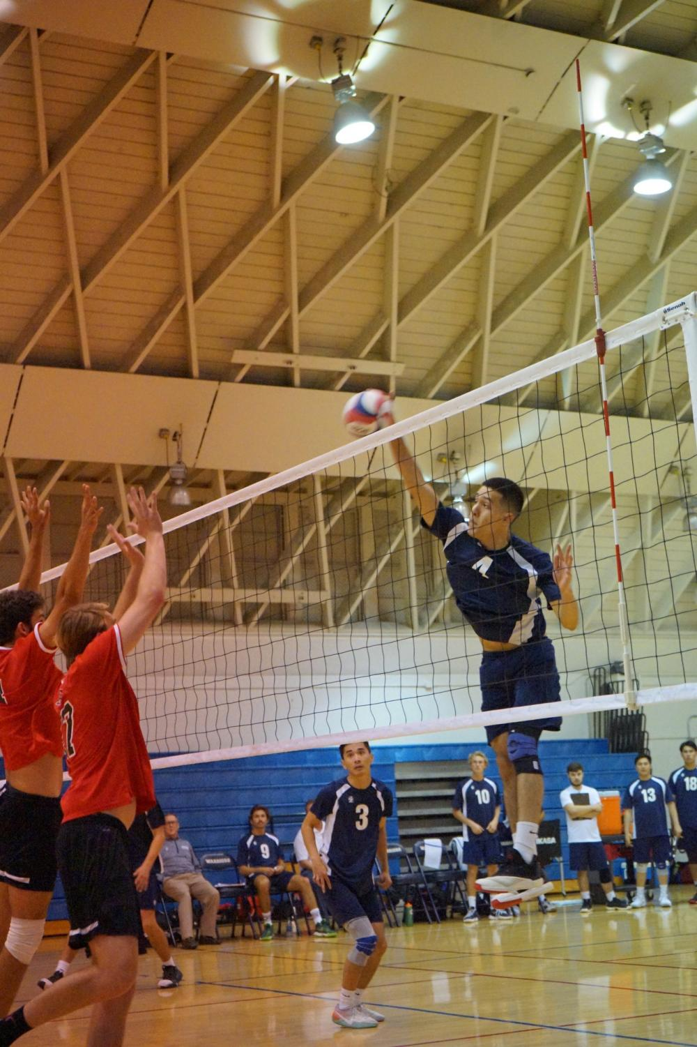 Warriors opposite hitter Angel Felix preparing an attack versus Santa Barbara City College at El Camino's South Gym on Wednesday, April 3. The Warriors won both games 25-21 and 25-17. Photo credit: Jun Ueda