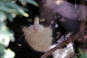 Following rumors of removing cats, public emphasizes importance of felines on campus