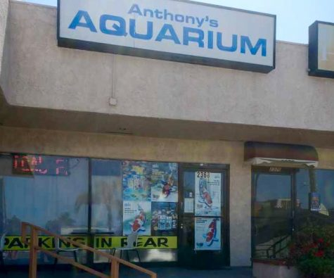Anthony's Aquarium in Lomita, California has managed to thrive during the Covid-19 pandemic despite a slow down in business